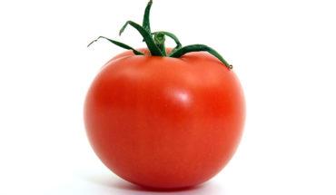 kandungan buah tomat
